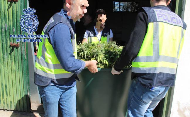 Nueve detenidos por el cultivo de 'maría' en inmuebles de varios municipios de la Región