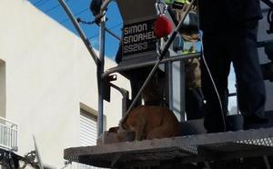 Rescatan en Zarandona dos perros abandonados en una terraza