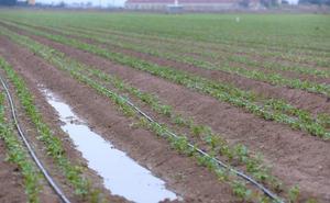 La Región y otras cinco comunidades se reparten 30 millones del plan de empleo agrario 2018