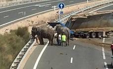 Restablecen el tráfico en la A-30 tras el vuelco de un camión que transportaba elefantes