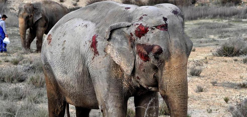 ¿Qué dice la legislación sobre los animales en los circos?