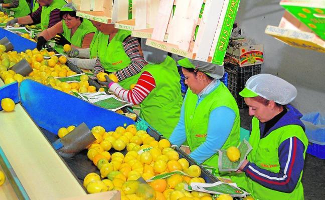 Optimismo por el nicho al limón fino que abriría en Asia la guerra comercial entre China y EE UU