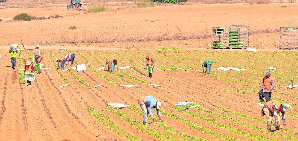 Una burbuja de sobreproducción provoca un desplome de precios de las hortalizas