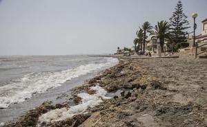 El ex director técnico de la CHS acusa al Ministerio de no evitar la degradación del Mar Menor