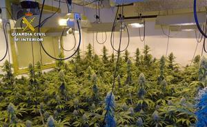 Desmantelan un invernadero con 120 plantas de marihuana en Calasparra