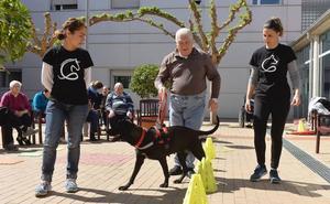 Perros adoptados que se convierten en terapeutas