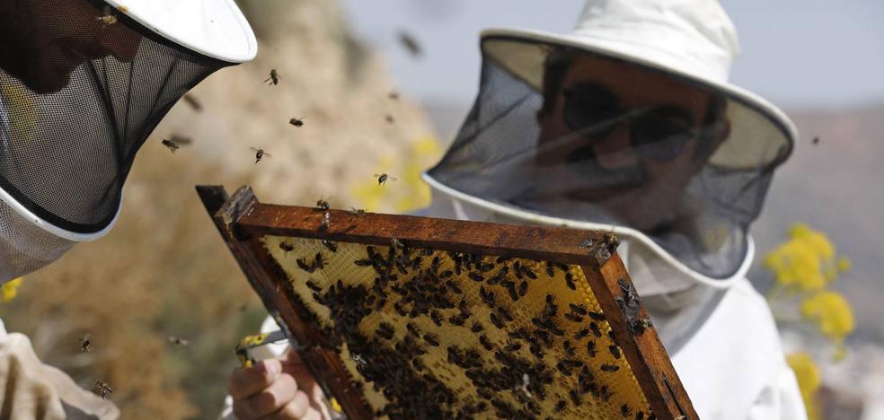 Más de 700 millones de abejas mueren cada año en la Región