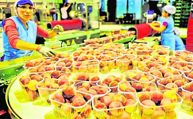Los productores recogerán 310 millones de kilos en la próxima campaña de fruta