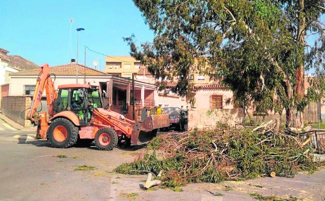 El viento tumba árboles en Mazarrón