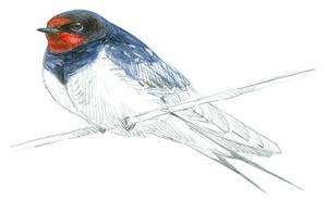 500 millones de pájaros