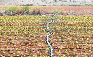 Convocadas las ayudas para mejorar las conducciones de riego de la Región
