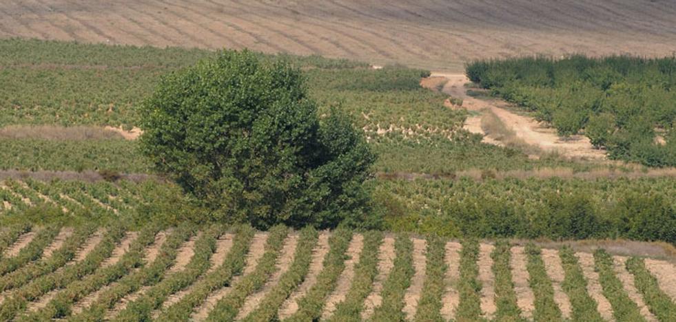 El vino de Bullas se alía con el medio ambiente
