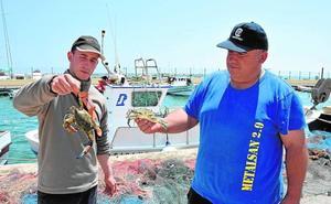Los pescadores capturan en 4 meses el doble de cangrejos azules que en 2017