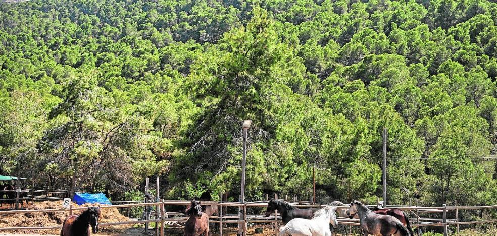 La equitación se reinventa en El Valle
