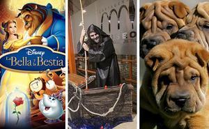 Museos, perros y taekwondo para disfrutar en familia