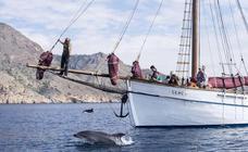 Los delfines nadan en El Portús