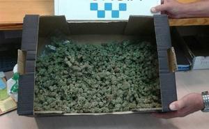 Dos detenidos en Murcia con más de medio kilo de marihuana
