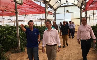 La cooperativa Hortamira produce ya el 60% de sus hortalizas en cultivos ecológicos