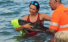 Salvan a una cría de delfín desorientada en una playa de La Manga