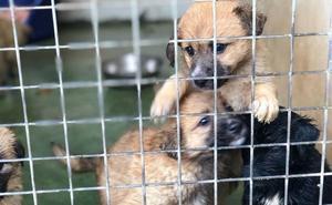 Los vecinos tienen 15 días para participar en la ordenanza de animales de compañía