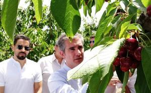 La cereza sobrepasa las 3.000 toneladas de producción en el Altiplano y Noroeste en la campaña de fruta de este año