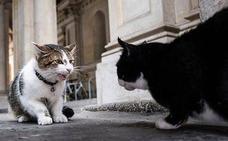 El PP recuerda la obligación de controlar la población de gatos