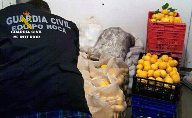 Robaron más de ocho toneladas de limones