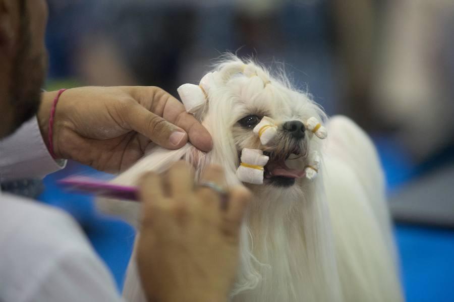 La Exposición Canina y el Salón de la Mascota reúnen a 2.000 perros en Torre Pacheco
