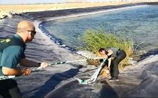 Dos guardias civiles rescatan a una perra que cayó en una balsa de riego en Roldán