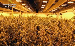 Cuatro detenidos por cultivar 2.260 plantas de marihuana en Balsicas