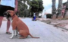 Destinan 42.000 euros para el 'sacrificio cero' de animales callejeros
