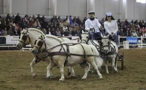 El mundo ecuestre acude a Equimur con casi 400 caballos de pura raza