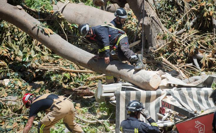 Se desploman más de 12 toneladas de ramas del ficus de Santo Domingo (II)
