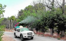 Medio Ambiente fumiga contra el escarabajo verde para salvar los olmos
