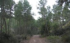 Un paseo alrededor de Torreguil