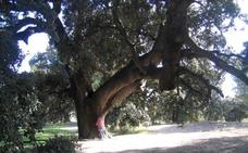 Encinas y pinos monumentales