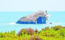 Empieza la instalación en Isla Grosa de fondeos más respetuosos