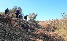 La ribera del Segura recuperará su bosque con mil nuevos árboles