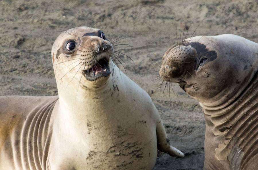 El concurso que premia las fotos de animales que son carne de meme