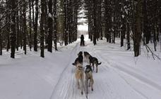 El frío amenaza en Canadá hasta a los pingüinos
