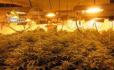 Desmantelan un invernadero con 82 plantas de marihuana en Alhama