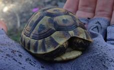 Cita con las tortugas moras