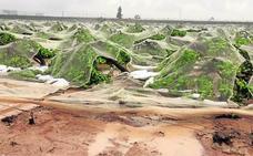 La lluvia y el granizo dejan daños en los cultivos y coches atrapados en Alhama y Bullas