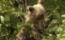 Especies españolas amenazadas recuperan sus poblaciones gracias a la Red Natura 2000