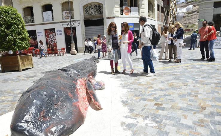 Recrean en Cartagena el cachalote que murió por indigestión de plástico