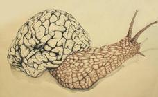 Logran implantar la memoria de un caracol en otro