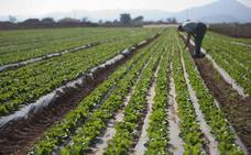 La sequía reduce en 30.000 hectáreas la zona de regadío de la cuenca del Segura