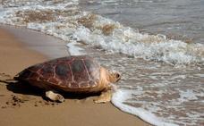 Medio Natural pone en marcha la campaña 'Caretta a la vista!'