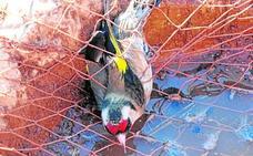 Medio Ambiente no dará más permisos para capturar aves cantoras