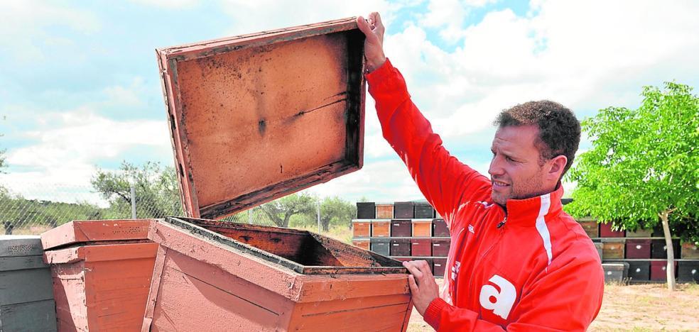 Los robos de colmenas repuntan ante un jugoso mercado negro
